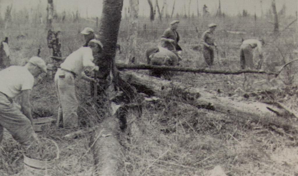 Bûcher, bûcher... aujourd'hui, à nous les bûchers! Photo du Spruce Log (octobre 1955), musée Ron-Morel de Kapuskasing