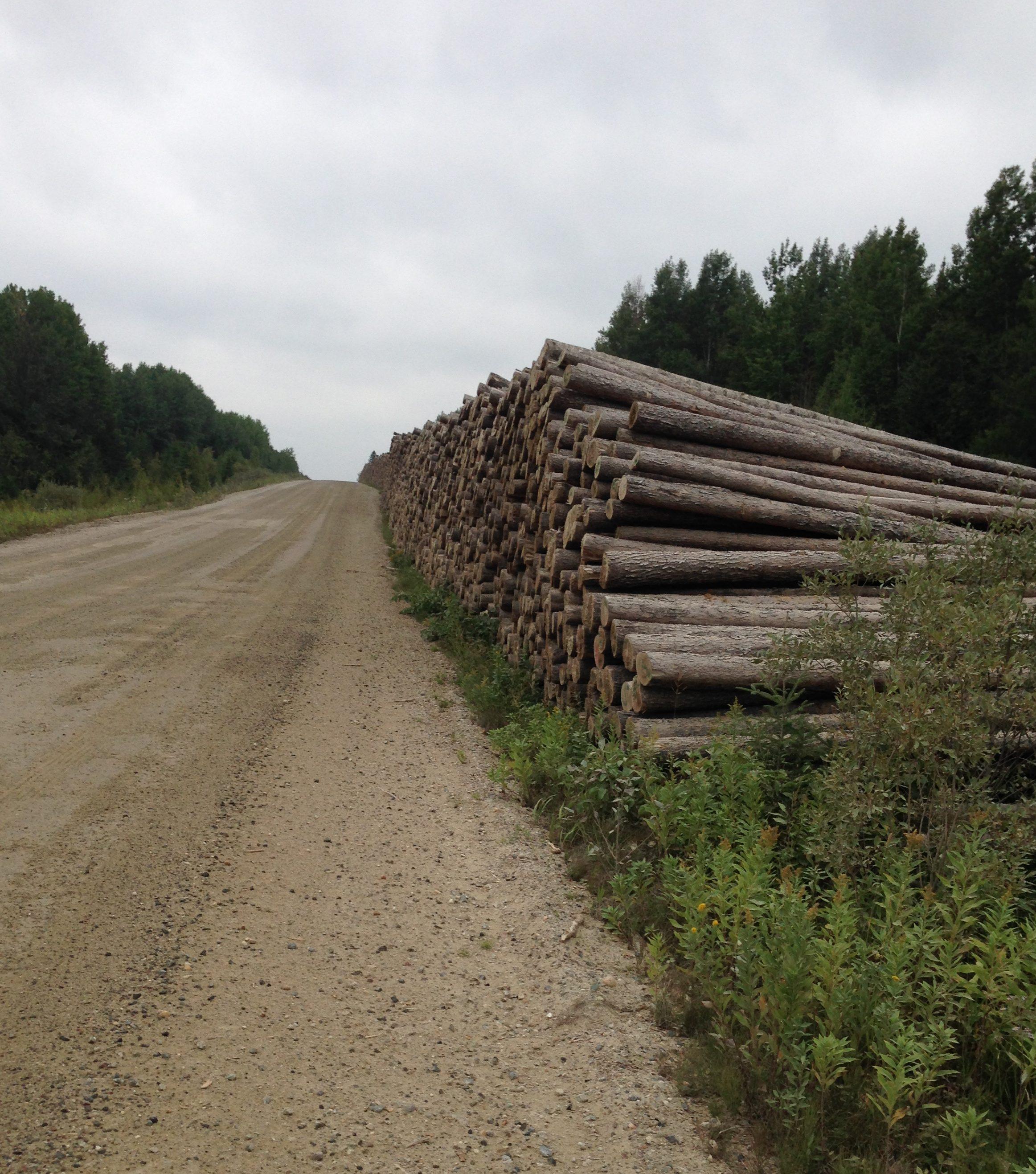 Plein de chemins forestiers dans le Nord. Photo : Ghislain Jacques